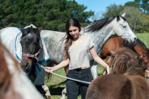 Vine Lodge Agistment Horse Facilities